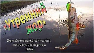 Утренний жор.. Ультралайт на мелководье, рыбалка на кренк, поппер, микроджиг, неогруженную резину