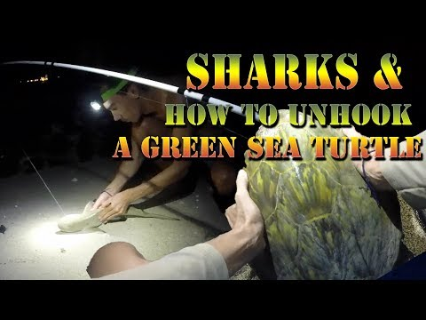 Catching 3 Hawaiian Blacktip Reef Sharks - What to do if you hook a Green Sea Turtle  B.O.D.S. 33
