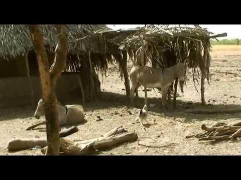 3 op reis gambia