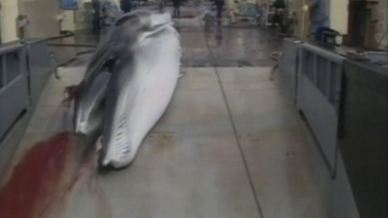 Banning whaling