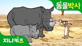 코뿔소는 눈이 나빠 | 안경 쓴 코뿔소 봤어? | 코뿔소의 특징 | 동물박사★지니키즈