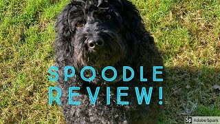 Spoodle Review!