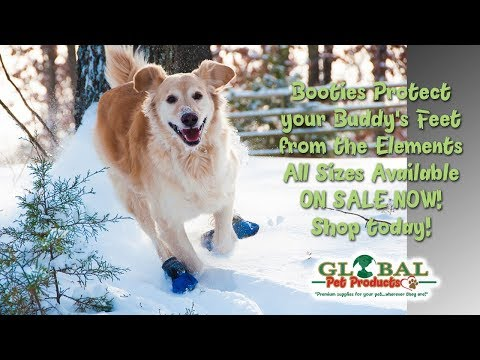 best-dog-boots-for-snow-right-here-best-dog-boots-for-snow