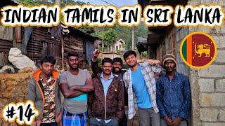 THE LIFE OF INDIAN TAMILS IN SRI LANKA - NUWARA ELIYA 🇱🇰
