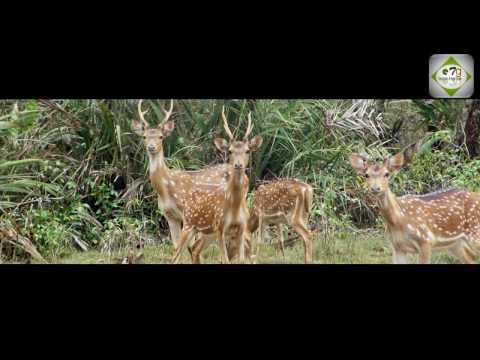 mini amazon - bhitorkonika odisha india documentary