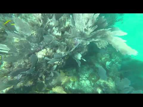 Snorkeling At Sombrero Reef 2015