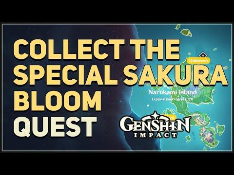 Collect the Special Sakura Bloom Genshin Impact