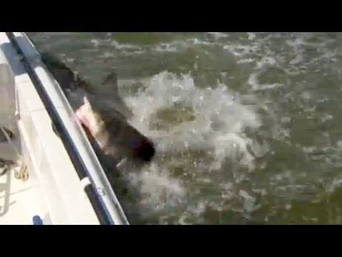 "Saltwater Experience: ""Shark Attack In The Everglades"" Season 2 