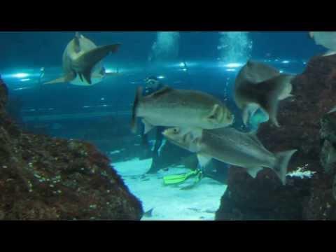 Inmersión Tiburones Aquarium Barcelona (20-12-2014)