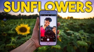 SUNFLOWER PHOTOGRAPHY & how Instagram can destroy beautiful places