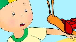Caillou and the Snail | Caillou Cartoon