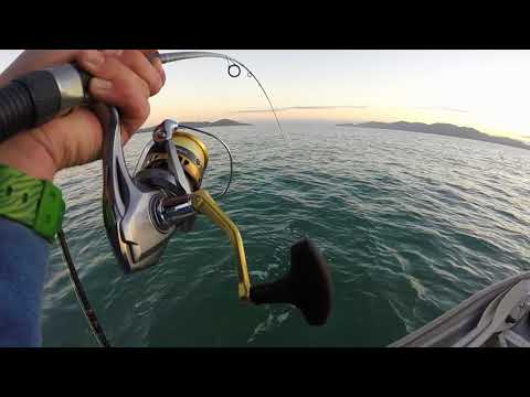 Big Mackerel In Close! Fishing Townsville, North QLD