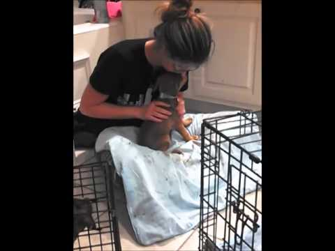 9 Parvo Pups Home Treatment Youtube