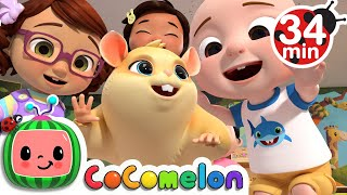 Download Class Pet Song + More Nursery Rhymes & Kids Songs - CoComelon Mp3 and Videos