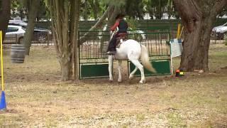 équitation camargue maniabilité
