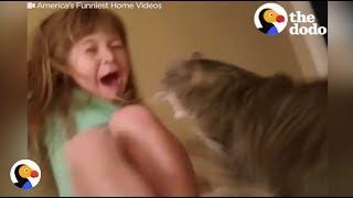 Jerk Cats Who JUST DON'T CARE | The Dodo thumbnail