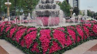 ПРАЗДНИК ЦВЕТОВ В БАКУ***Flower Festival in Baku***(ПРАЗДНИК ЦВЕТОВ В БАКУ Flower Festival in Baku., 2015-05-14T10:07:47.000Z)