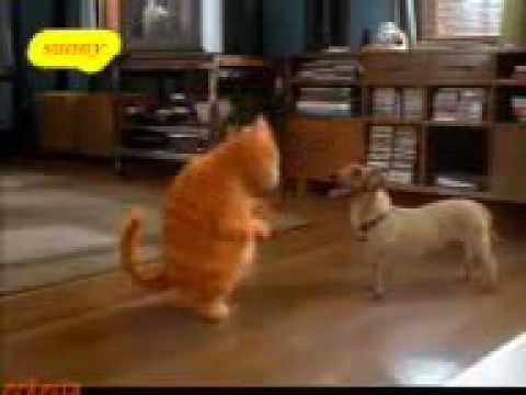 Cat or dog funny punjabi dance