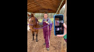 Learn more about how to groom and measure a horse!