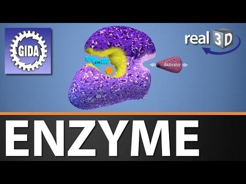 gida enzyme biologie real3d software dvd trailer youtube. Black Bedroom Furniture Sets. Home Design Ideas