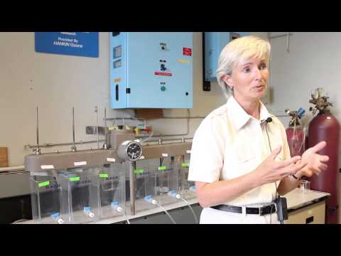 Professor Susan Andrews and Drinking Water Research