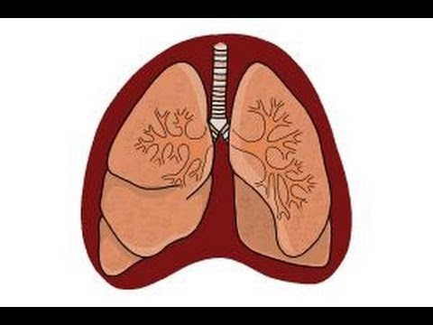 How to draw lungs youtube how to draw lungs ccuart