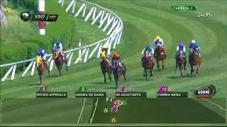 Vidéo de la course PMU PREMIO BUQUE