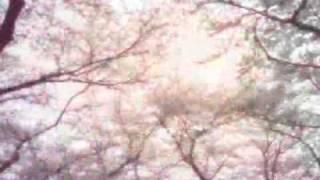 [Piano Cover] Mika Nakashima Sakura medley (Sakurairo maukoro+ SAKURA ~hanagasumi~)