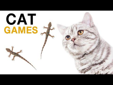 เกมส์แมว จิ้งจก บนหน้าจอ สำหรับแมว แกล้งแมว ได้ผลดี