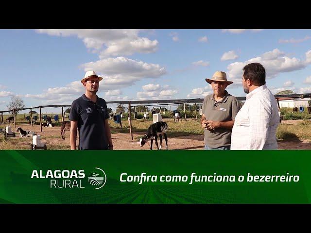 Confira como funciona o bezerreiro de uma das maiores fazendas produtoras de leite do NE