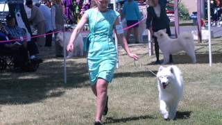 Part II: Barbary Cost Samoyed Club Specialty-2014