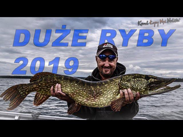 ŻYCIÓWKI - duże ryby 2019 / odc.34