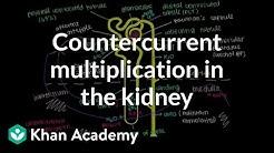 hqdefault - Counter Multiplier System Kidney