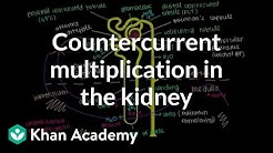 hqdefault - Kidney Regulates The Concentration Of Urine