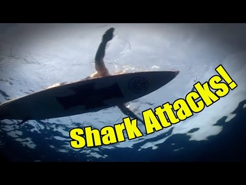 Shark Attacks | SHARK ACADEMY
