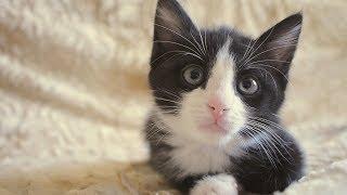 Когда завел котенка