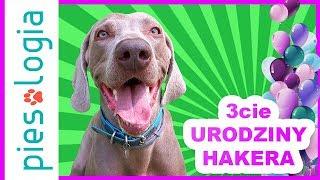 Trzecie Urodziny Hakera