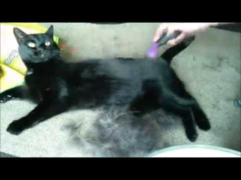 Cat Grooming | testing the FURMINATOR