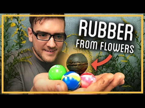 Can You Turn Wildflowers into Rubber?