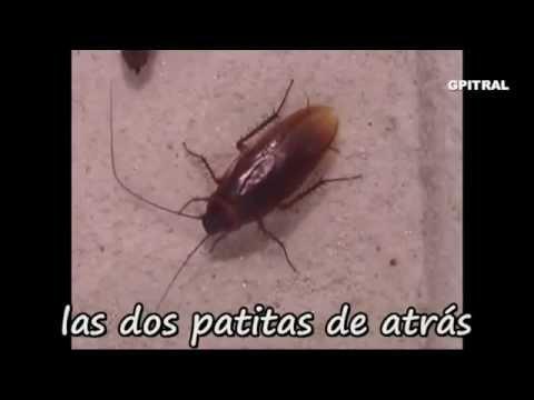 La Cucaracha traditial Spanish folk Mexican sg