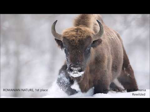 "9th International ""Milvus"" Nature Photography Contest - digital album"