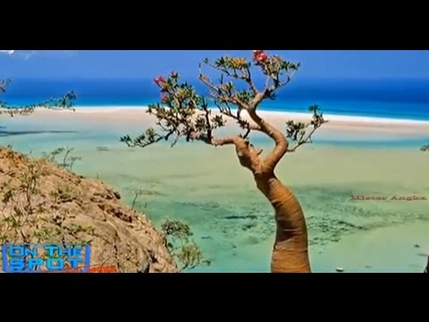 Pulau Tempat Di Kurungnya DAJJAL Kalian Harus Tahu
