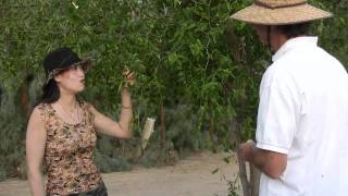 Hugo shows Hongxia our Chinese date trees