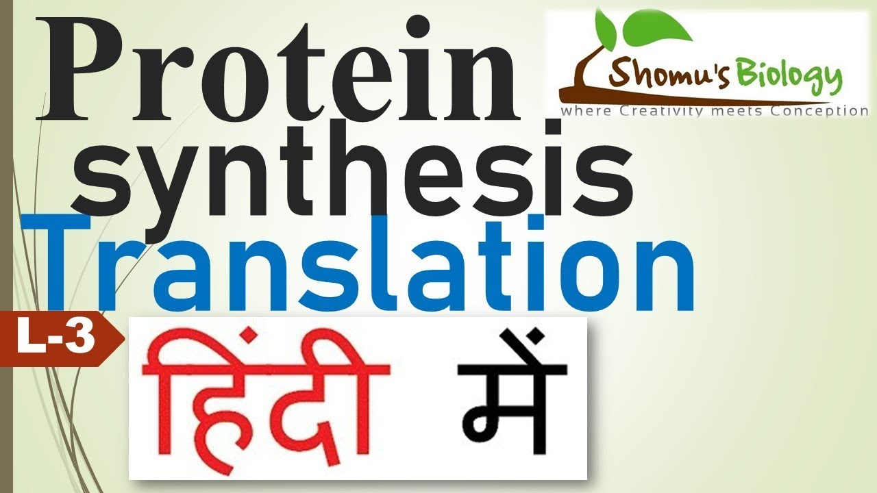 Translation in Hindi (Protein synthesis in Hindi)
