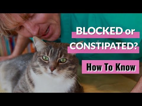 Is Your Cat Blocked Or Constipated?