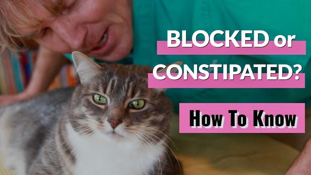 Is Your Cat Blocked Or Constipated Youtube