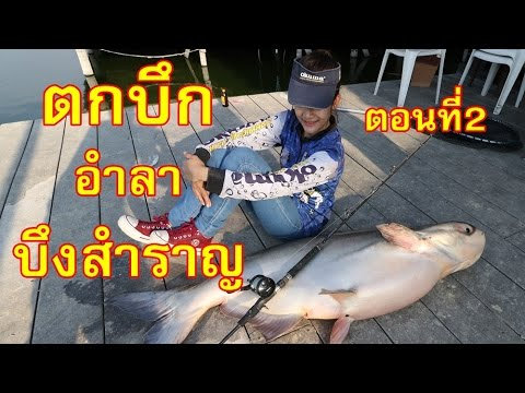 ตกปลาบึก ปิดตำนาน 33 ปี บึงสำราญ ตอนที่2 by fishingEZ