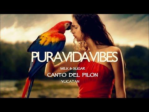 Milk & Sugar - Canto Del Pilón (PVV edit) YUCATAN