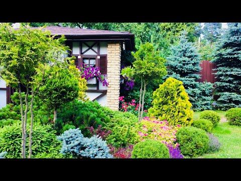 Розы и хвойники в ландшафтном саду/уход за туями