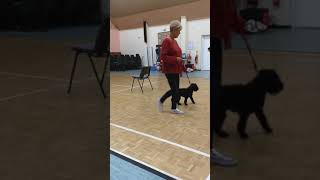Edith weeing at puppy class